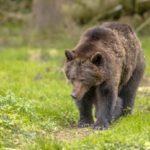 """VIDEO. Am aflat unde e """"Aleea Urșilor"""": în Hunedoara, la Grădiștea Muncelului!"""