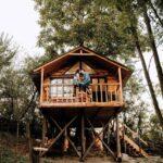 Căsuțe suspendate în copaci, locul de refugiu pentru tot mai mulți turiști!