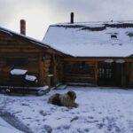 Transilvania, destinație recomandată pentru cei care își iau câinii în concedii